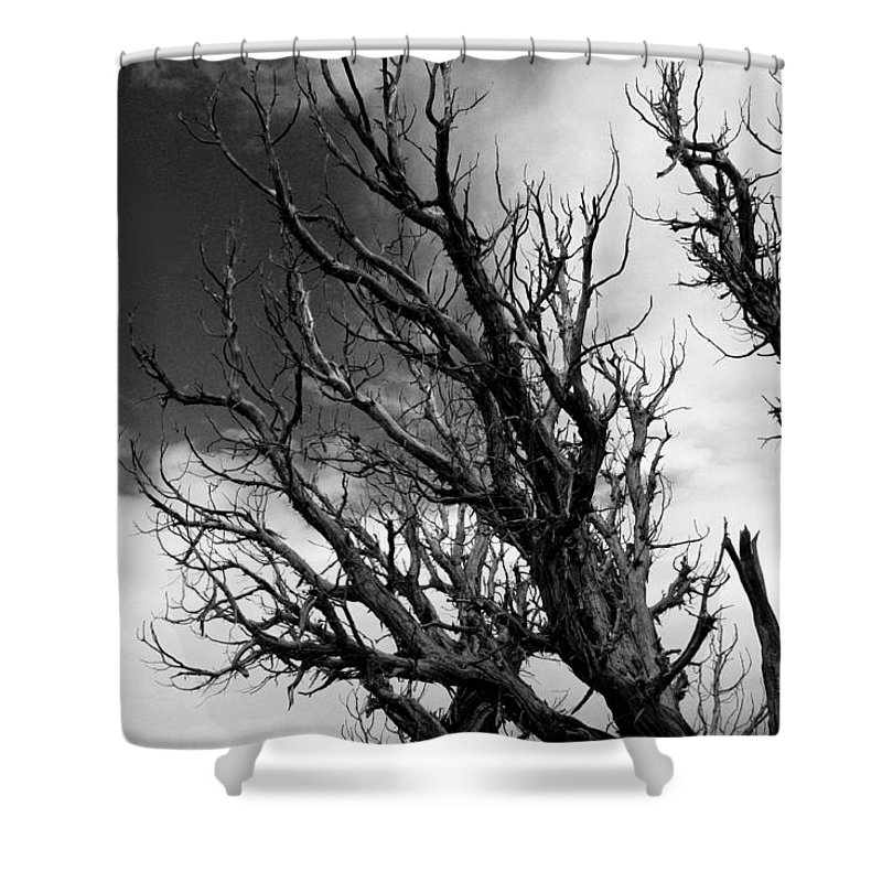 Pine Shower Curtain featuring the photograph At The End Of Time by Joe Kozlowski
