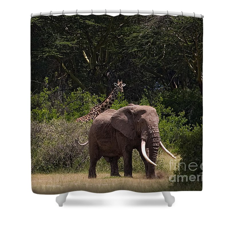 Elephantidae Loxodonta Africana Shower Curtain featuring the photograph At The Foot Of Kilimanjaro by J L Woody Wooden