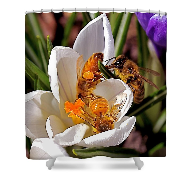 Bee Shower Curtain featuring the photograph At Work by Rona Black