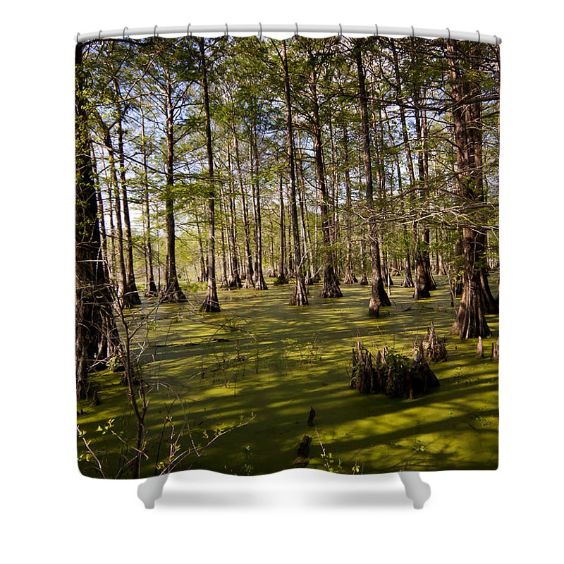 Swamp Shower Curtain featuring the photograph Atchafalaya Swamp  #6913 by J L Woody Wooden