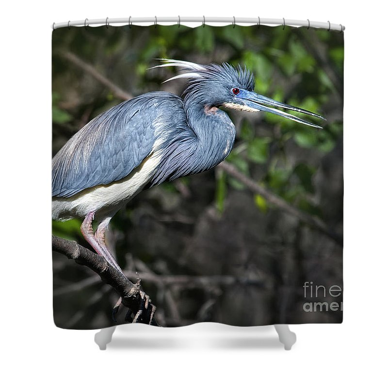 Shower Curtain featuring the photograph Attentive by Claudia Kuhn