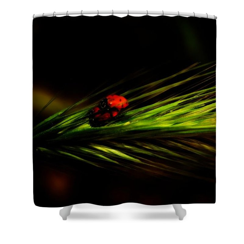 Green Shower Curtain featuring the photograph Attraction by Jessica Shelton
