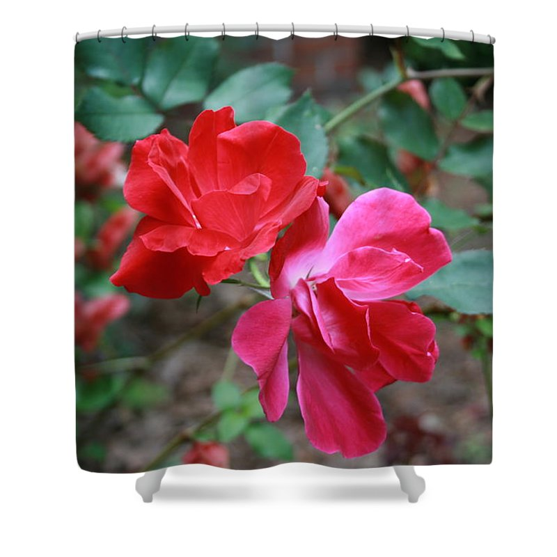 Roses Shower Curtain featuring the photograph Attraction by Marian Palucci-Lonzetta