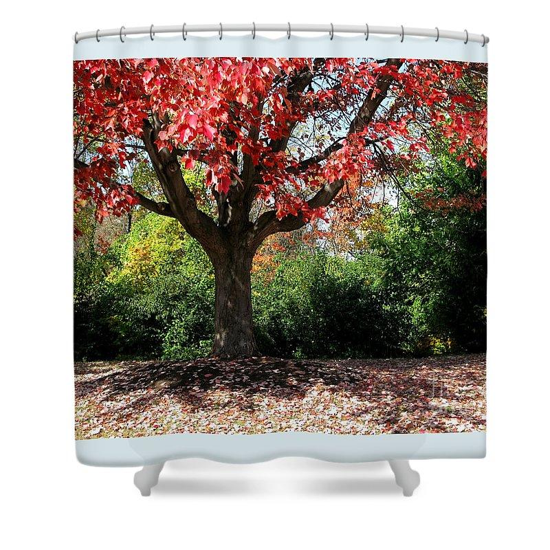 Autumn Shower Curtain featuring the photograph Autumn Ablaze by Ann Horn