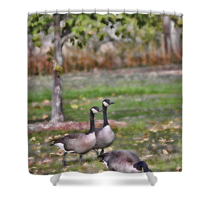 Geese Shower Curtain featuring the photograph Autumn Afternoon by Sylvia Thornton