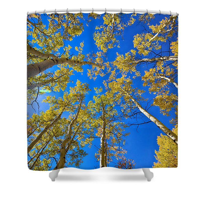 Aspen Shower Curtain featuring the photograph Autumn Aspen Magic by James BO Insogna