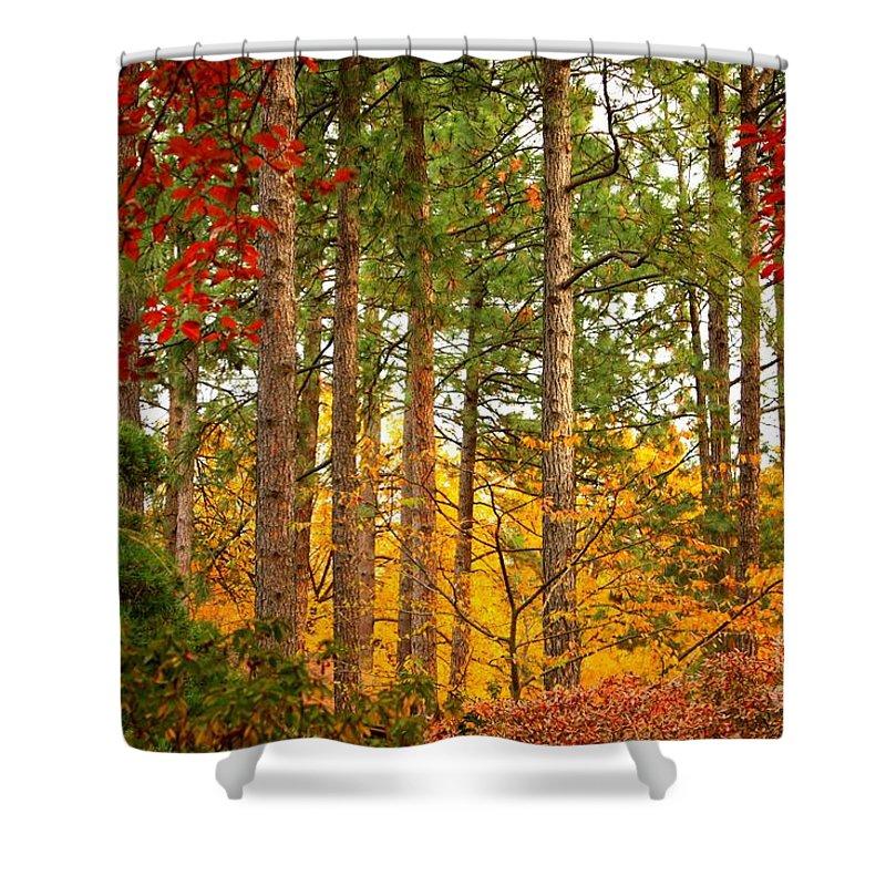 Autumn Shower Curtain featuring the photograph Autumn Canvas by Carol Groenen