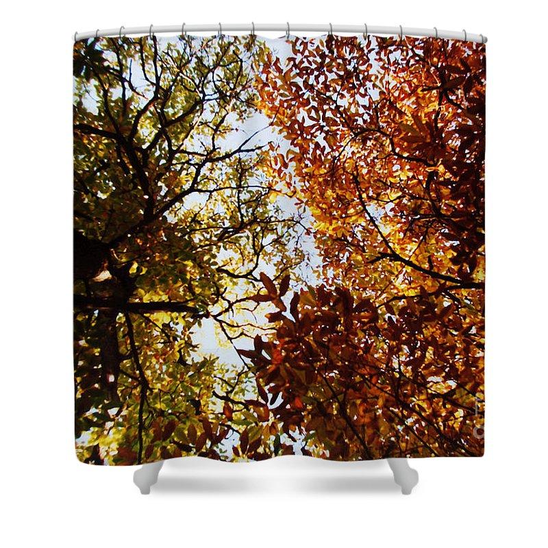 Autumn Chestnut Canopy Shower Curtain featuring the photograph Autumn Chestnut Canopy  by Martin Howard