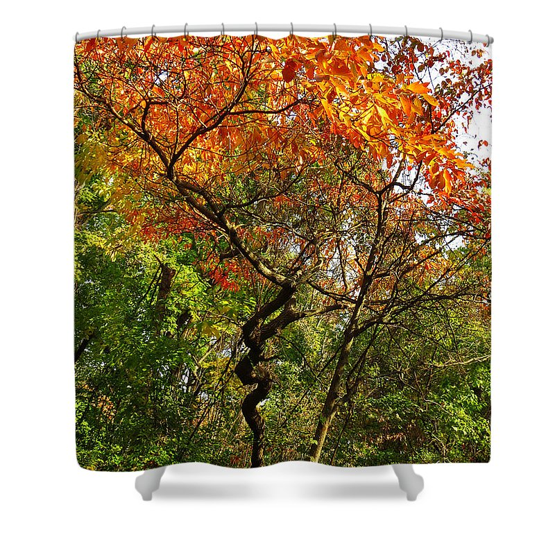 Autumn Color Shower Curtain featuring the photograph Autumn Color At Old Woman Creek 2 by Shawna Rowe