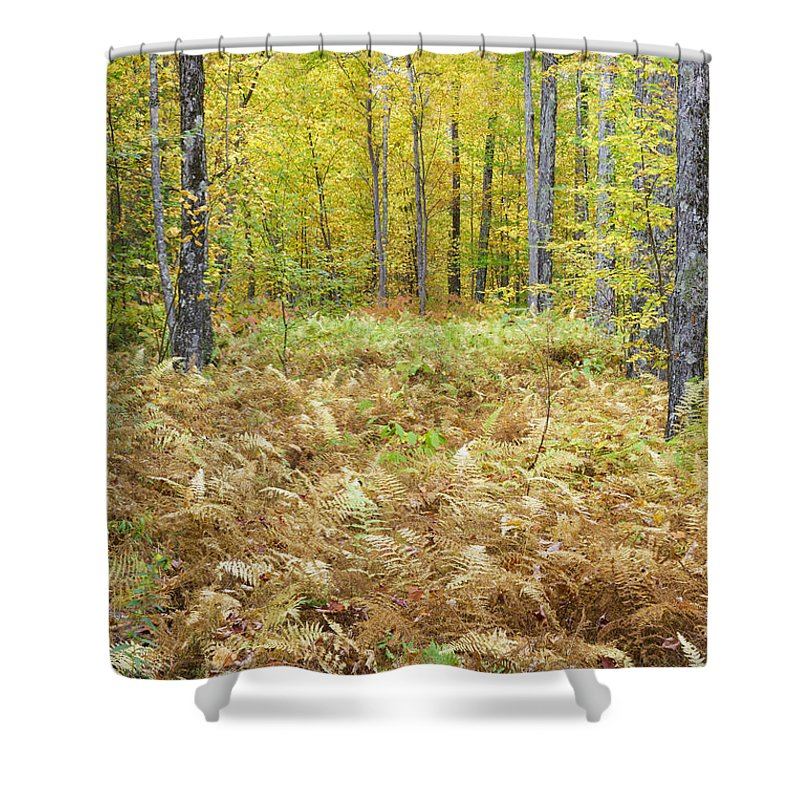 Autumn Shower Curtain featuring the photograph Autumn Forest - White Mountains New Hampshire by Erin Paul Donovan
