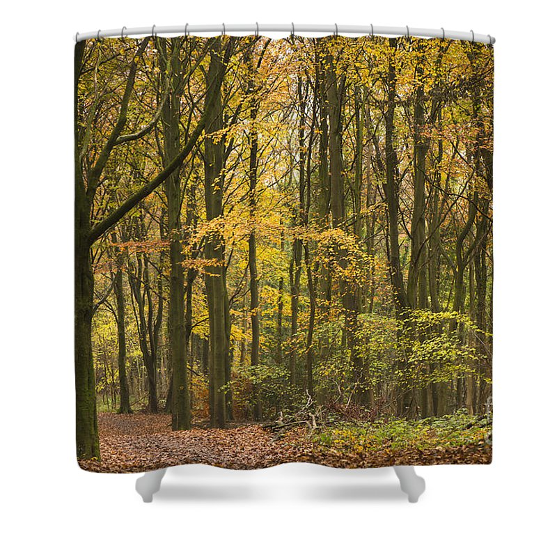 Atmospheric Shower Curtain featuring the photograph Autumn Gold by Anne Gilbert