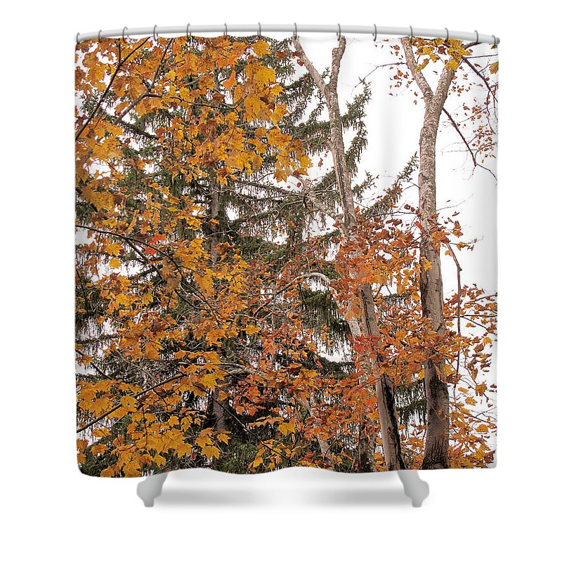Autumn Shower Curtain featuring the photograph Autumn Gold by Sandy McIntire