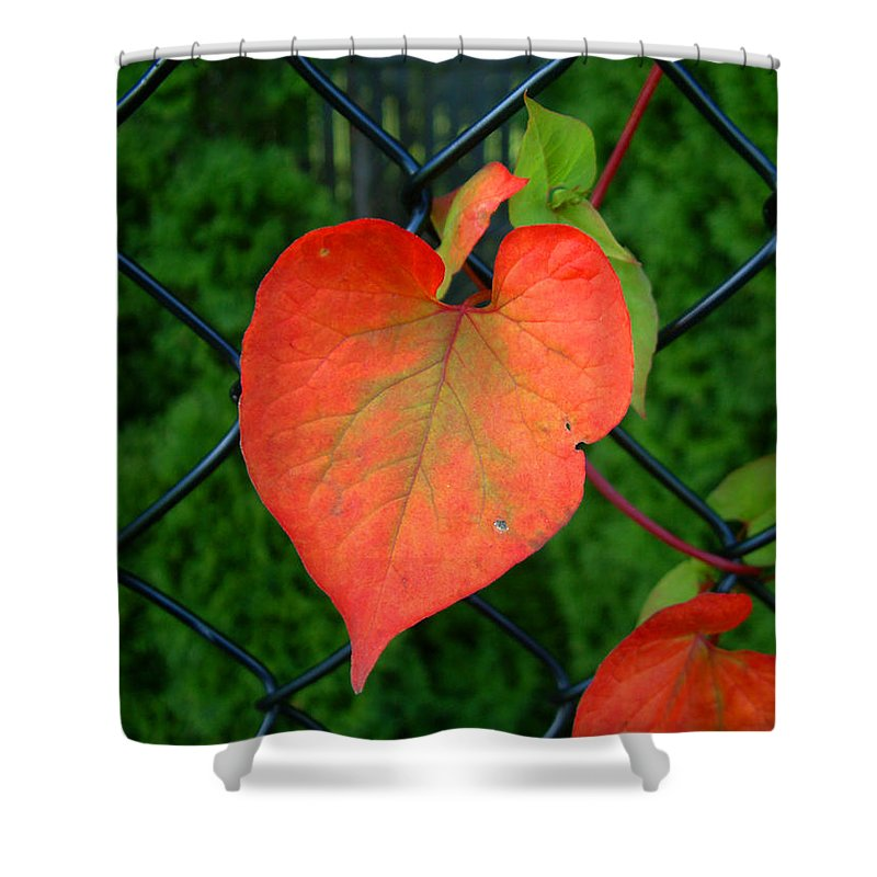 Vine Shower Curtain featuring the photograph Autumn In July by RC DeWinter