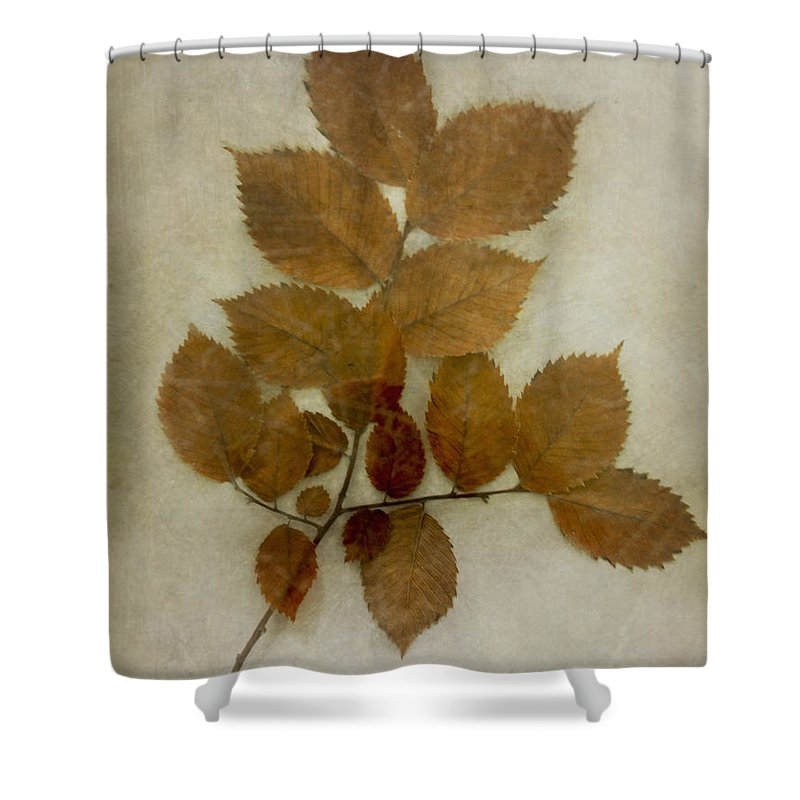Leaves Shower Curtain featuring the photograph Autumn Leaves by Margie Hurwich