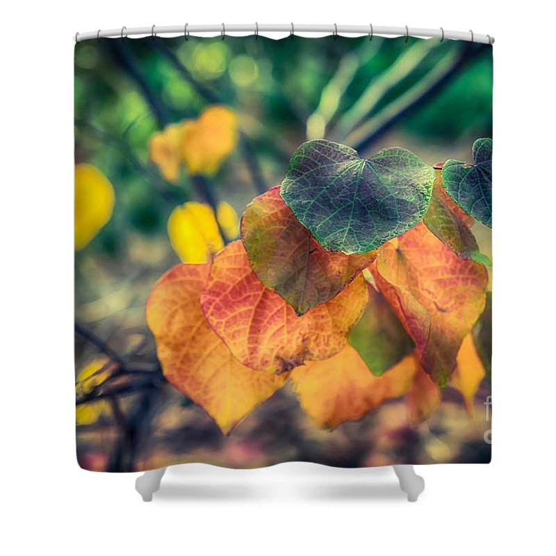 Autumn Shower Curtain featuring the photograph Autumn Leaves by Ray Warren