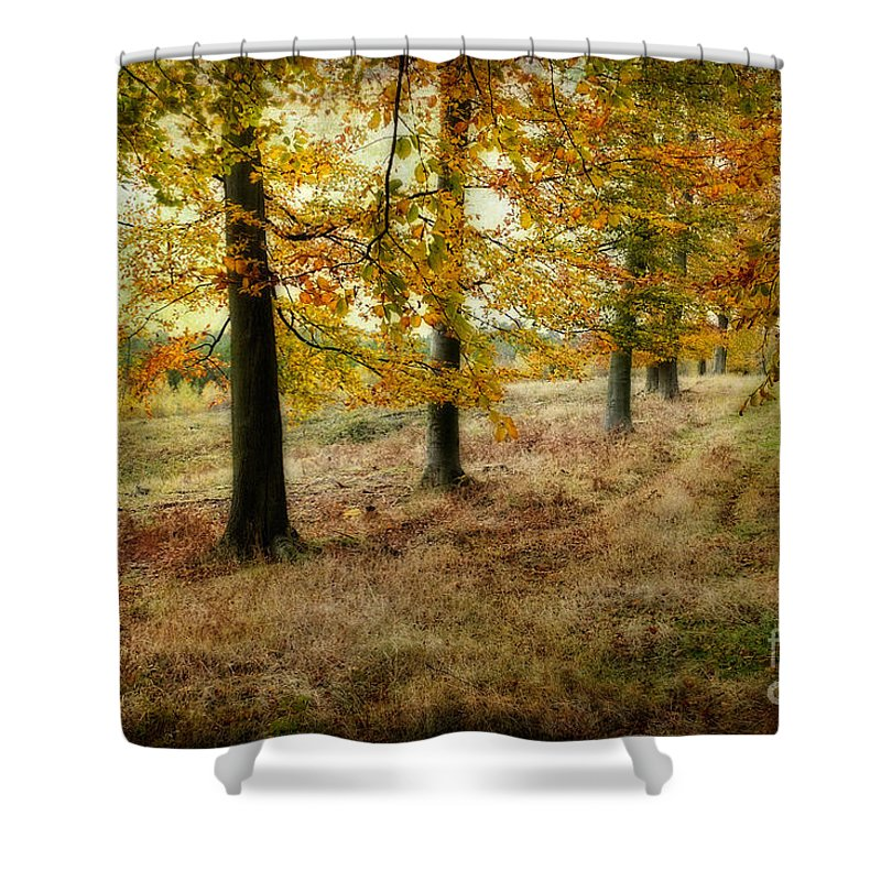 Autumn Trees Shower Curtain featuring the photograph Autumn On Cannock Chase by Ann Garrett