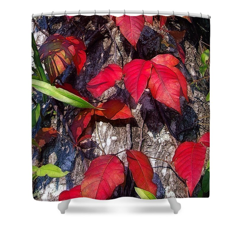 Poison Ivy Shower Curtain featuring the photograph Autumn Poison Ivy by Judi Bagwell