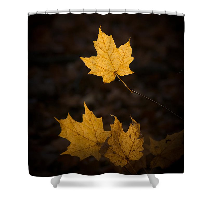 Fall Shower Curtain featuring the photograph Autumn Remnant by Bill Pevlor