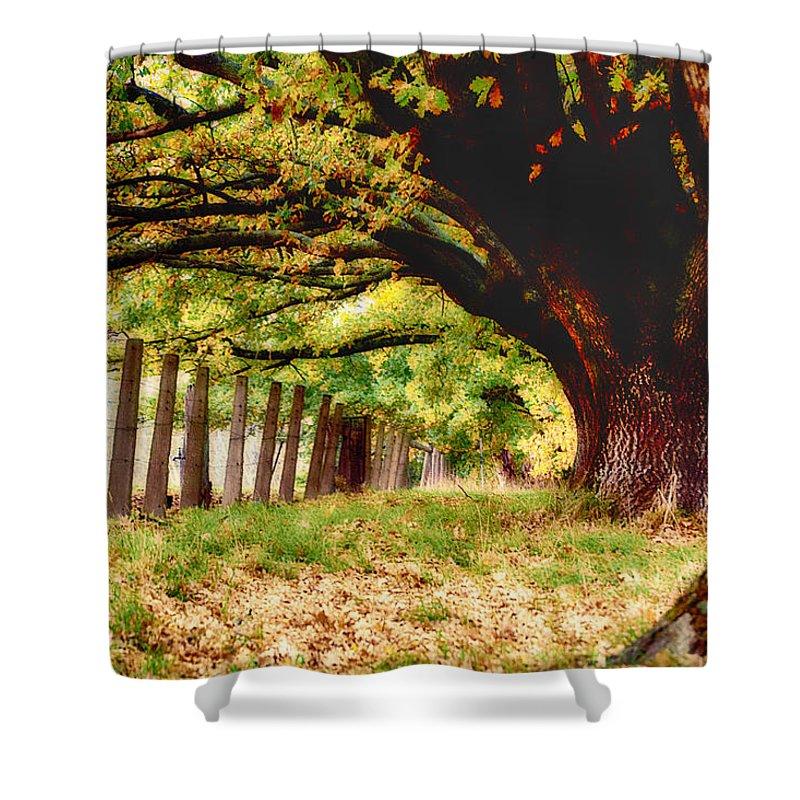 Autumn Shelter Shower Curtain featuring the photograph Autumn Shelter by Douglas Barnard
