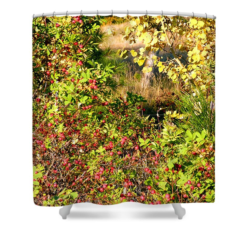 Autumn Splendor 7 Shower Curtain featuring the photograph Autumn Splendor 7 by Will Borden