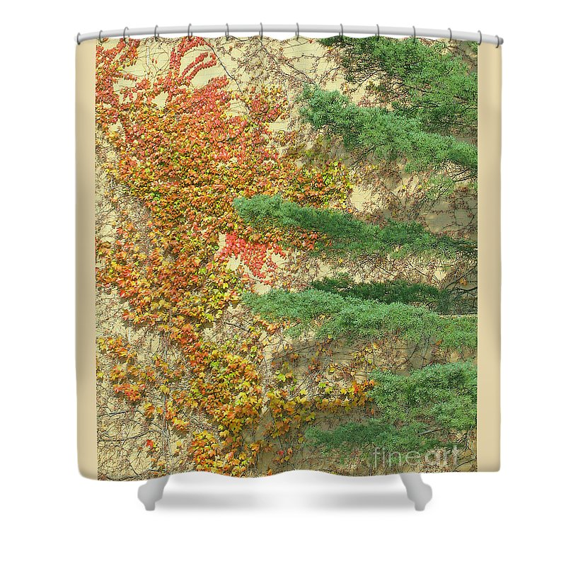 Abstract Shower Curtain featuring the photograph Autumn Vine And Evergreen by Ann Horn