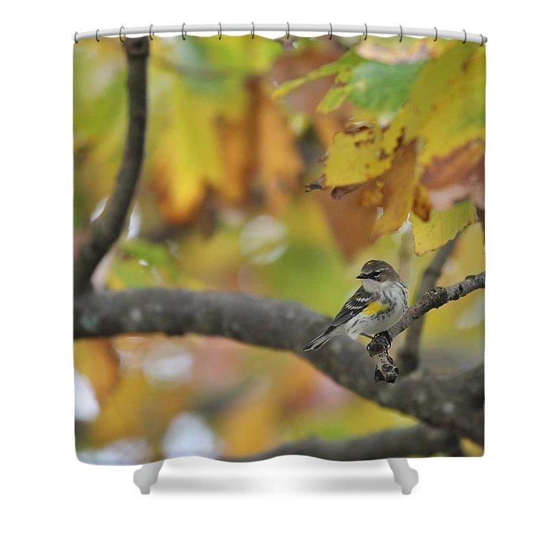 Songbird Shower Curtain featuring the photograph Autumn Warbler by Paul Golder