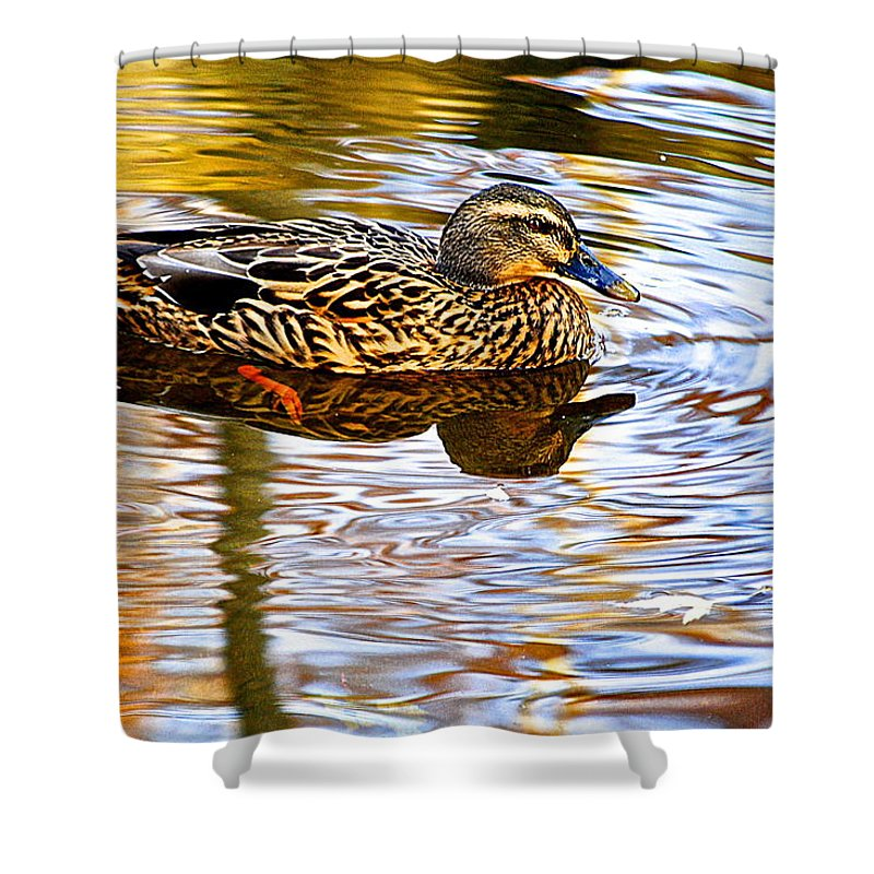 Autumn Shower Curtain featuring the photograph Autumns Brilliance by Frozen in Time Fine Art Photography
