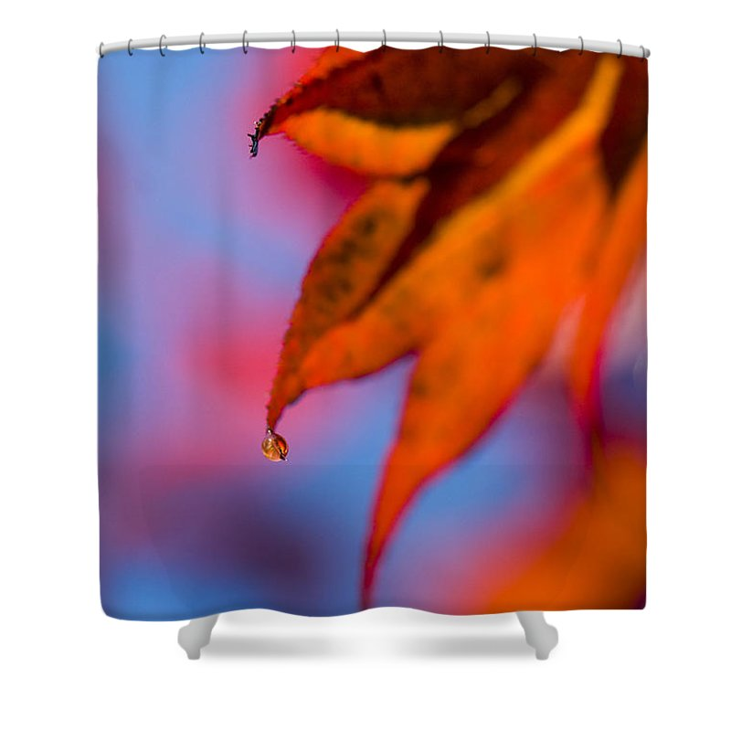 Acer Shower Curtain featuring the photograph Autumn's Finest by Anne Gilbert
