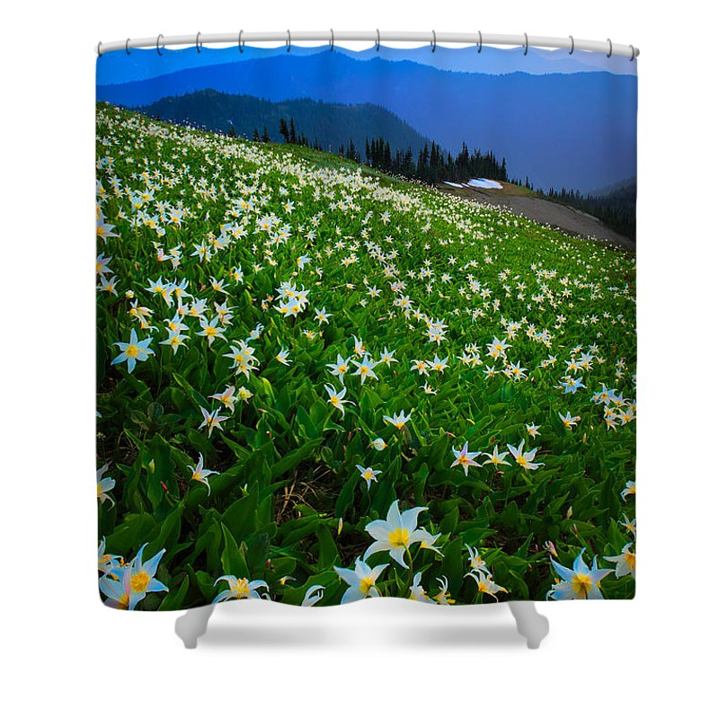America Shower Curtain featuring the photograph Avalanche Lily Field by Inge Johnsson