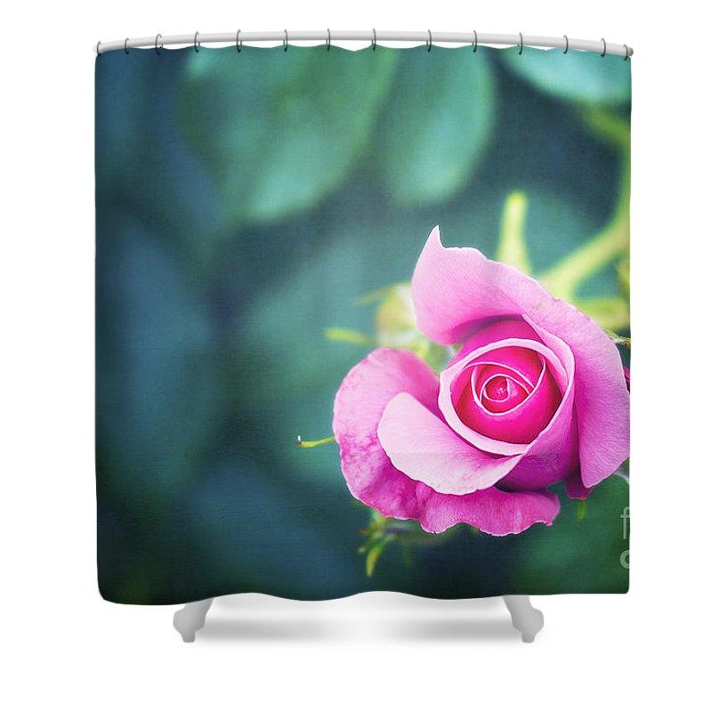 Raspberry Shower Curtains