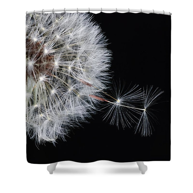 Dandelion Shower Curtain featuring the photograph Away We Go by Dennis Reagan