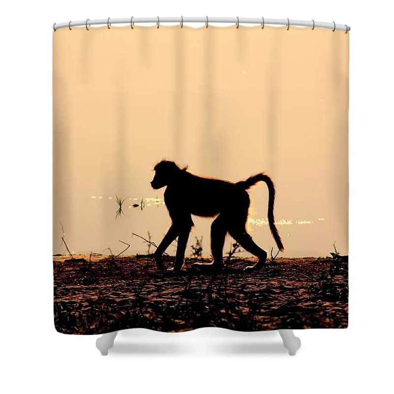 Baboon Sunset Shower Curtain featuring the photograph Baboon Sunset by Amanda Stadther