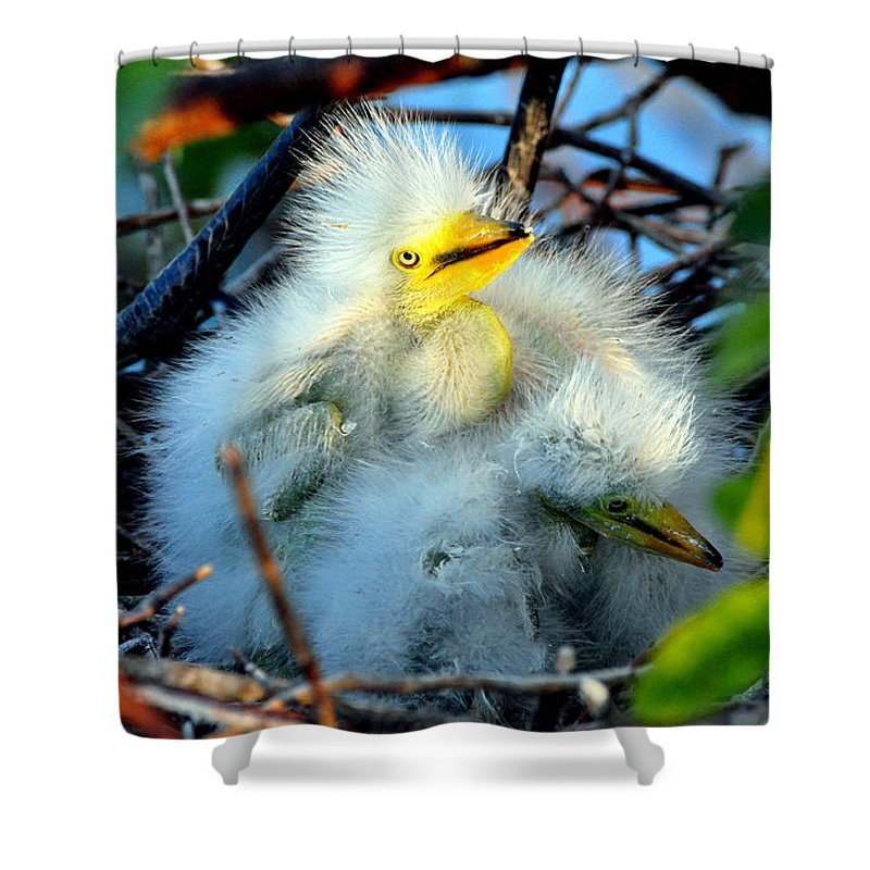 Babies Shower Curtain featuring the photograph Baby Egrets by Davids Digits