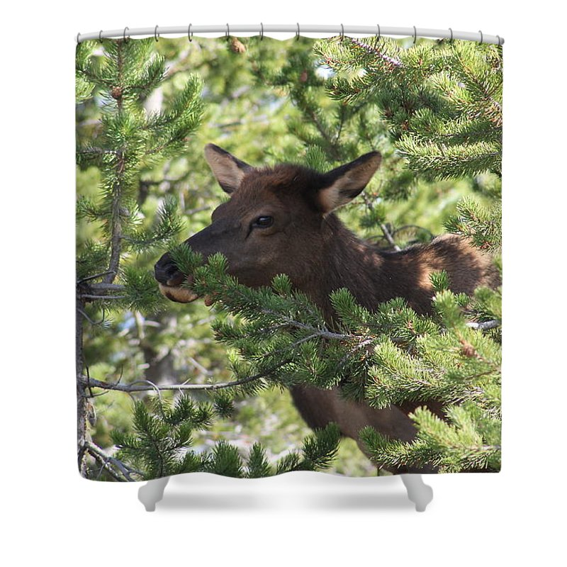 Wildlife Shower Curtain featuring the photograph Baby Elk by G Berry