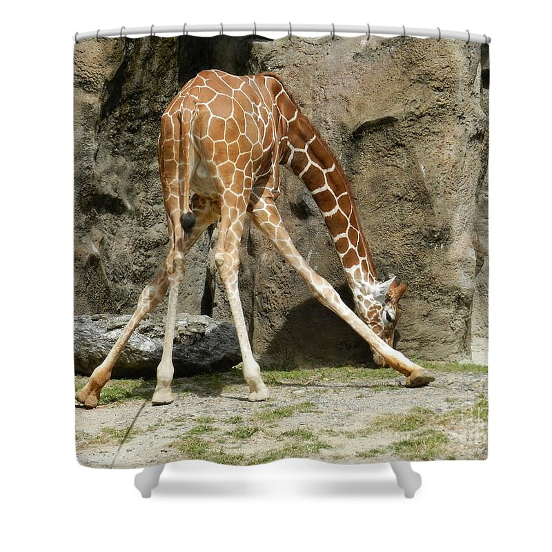 Baby Shower Curtain featuring the photograph Baby Giraffe 1 by Heather Jane
