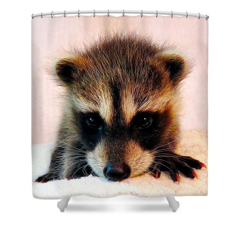 Raccoon Shower Curtain featuring the photograph Baby Love by Art Dingo