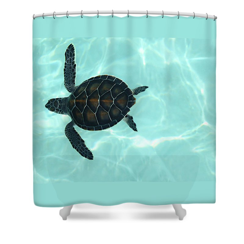 Baby Sea Turtle Shower Curtain featuring the photograph Baby Sea Turtle by Ellen Henneke
