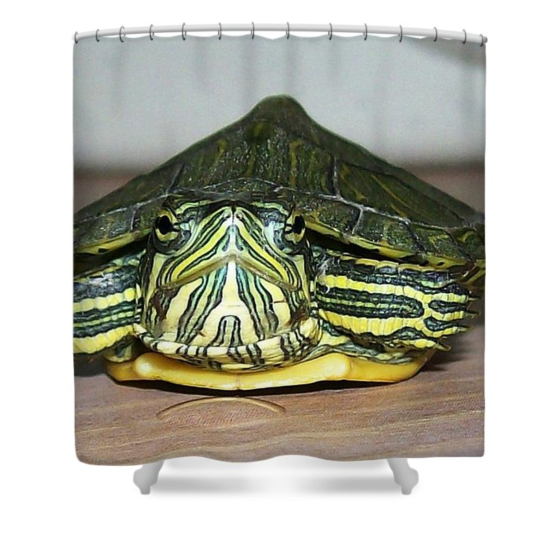 Turtle Shower Curtain featuring the photograph Baby Turtle Straight On by Sara Raber