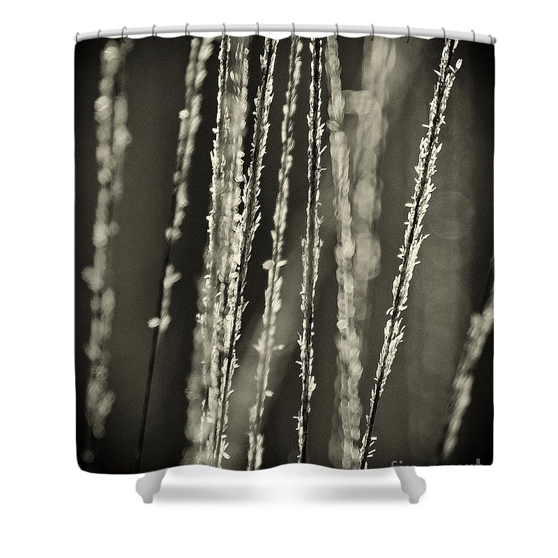 North America Shower Curtain featuring the photograph Backlit Sepia Toned Wild Grasses In Black And White by Dave Welling