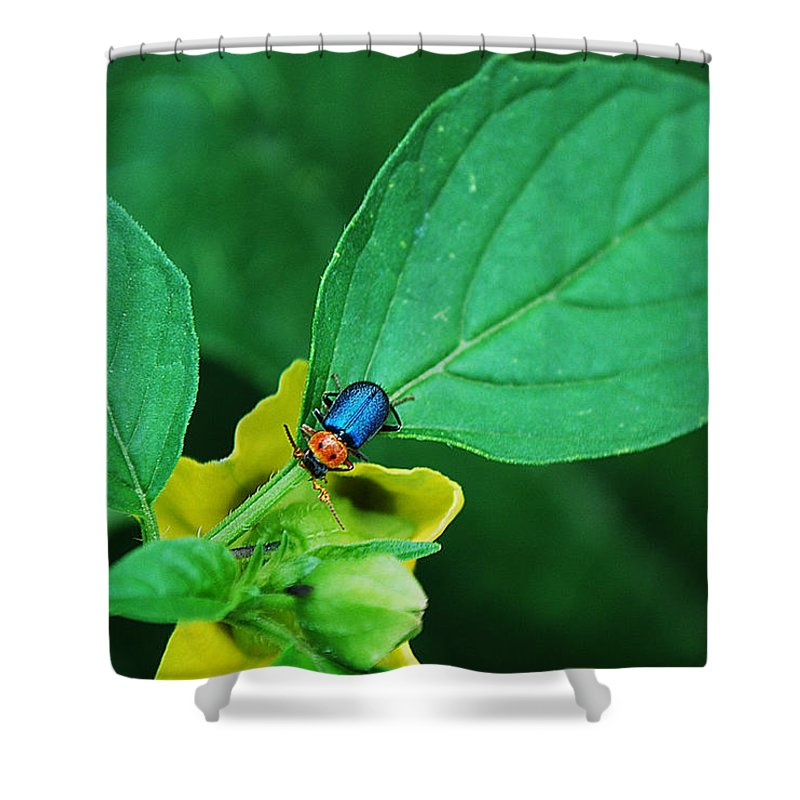 Becky Furgason Shower Curtain featuring the photograph #backyardboogie by Becky Furgason