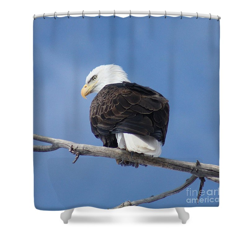 Bald Eagle Shower Curtain featuring the photograph Bald Eagle by Brandi Maher