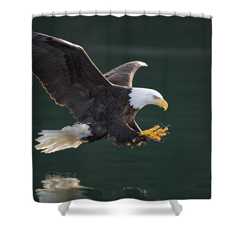 Action Shower Curtain featuring the photograph Bald Eagle Catching Fish by John Hyde