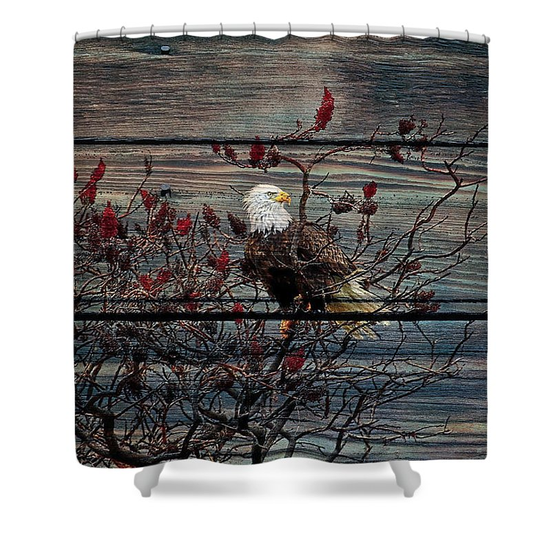 Bald Eagle Shower Curtain featuring the photograph Bald Eagle On Barnwood by Steve McKinzie