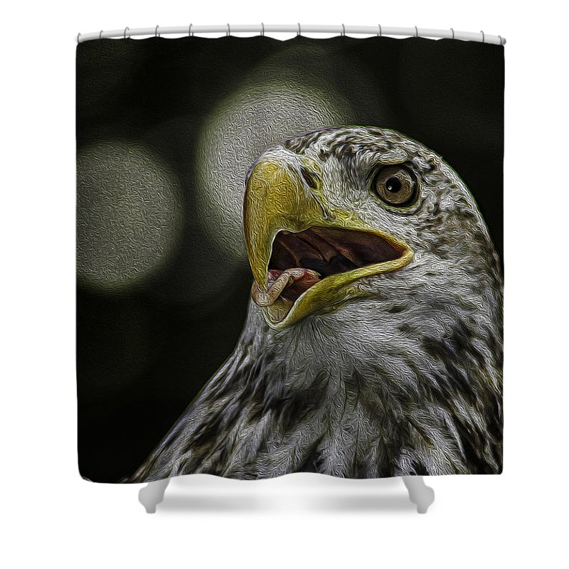 Eagle Shower Curtain featuring the photograph Bald Eagle by Phil Cardamone