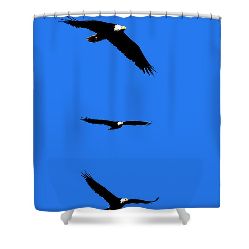 Eagle Shower Curtain featuring the photograph Bald Eagle Triptych by Thomas Marchessault
