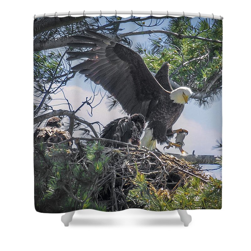 Bald Eagle Shower Curtain featuring the photograph Bald Eagle With Eaglets And Fish by Everet Regal