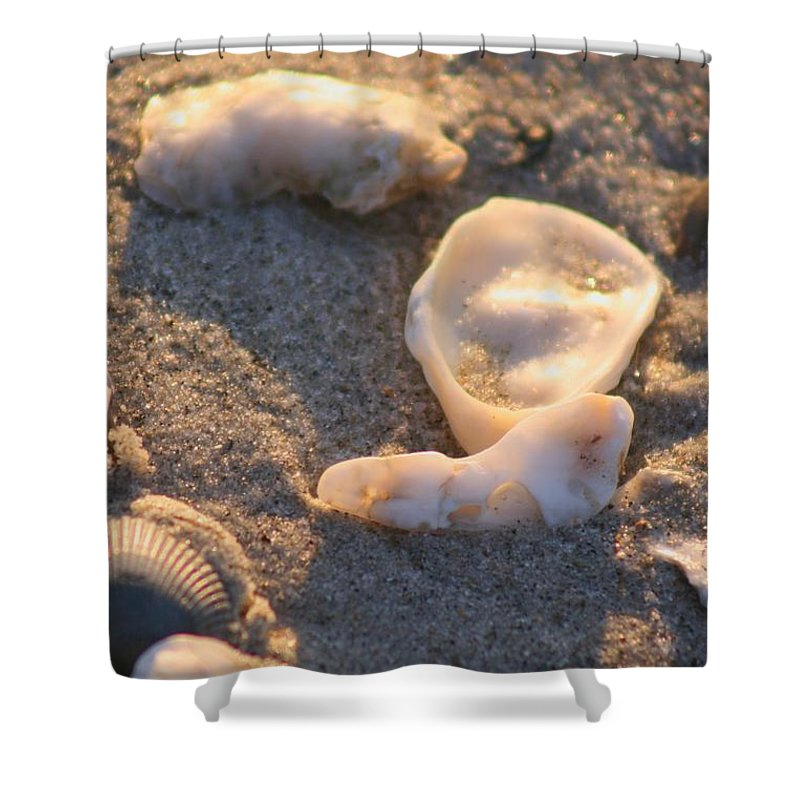 Shells Shower Curtain featuring the photograph Bald Head Island Shells by Nadine Rippelmeyer