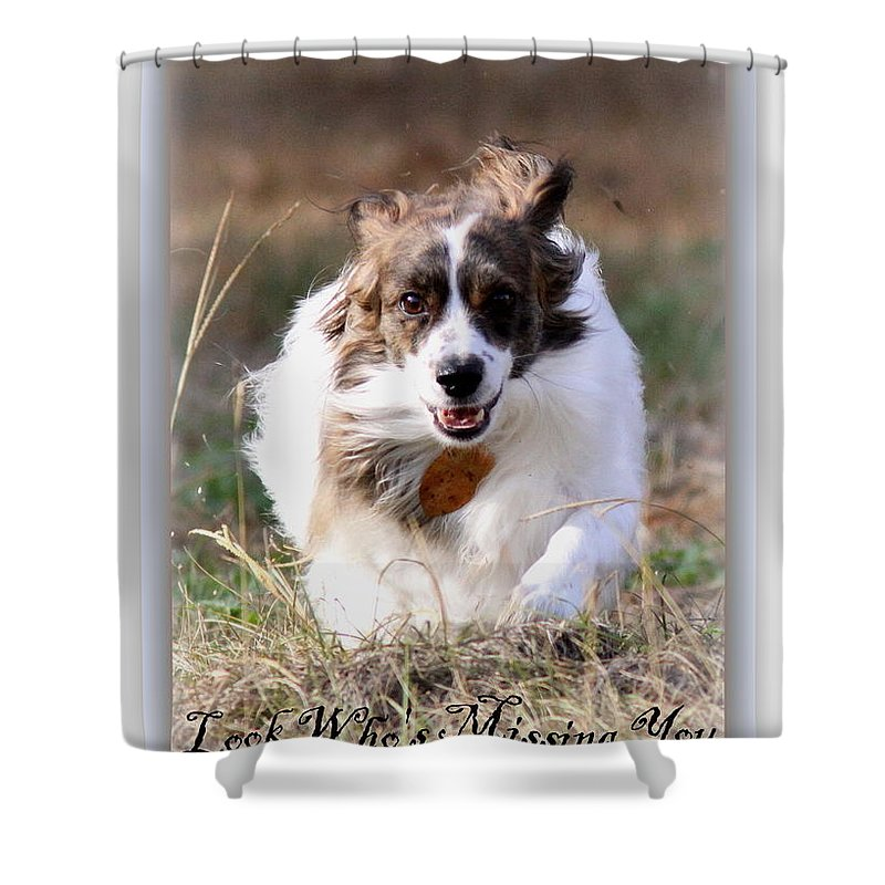 Nature Shower Curtain featuring the photograph Bama - Pets - Dogs by Travis Truelove