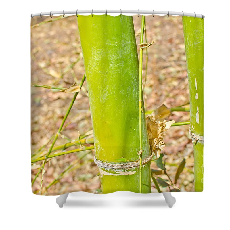 Bambusa Shower Curtain featuring the photograph Bamboo Stems by Image World