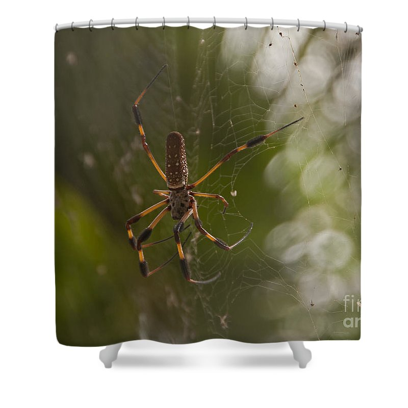 Sunrise Shower Curtain featuring the photograph Banana Spider by Roy Thoman